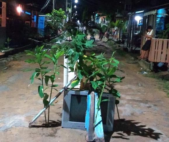 Moradores da rua Barreirinha plantam bananeiras para chamar atenção da secretaria de Obras do município