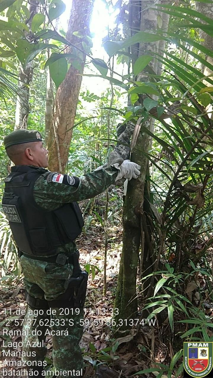 Batalhão Ambiental resgata bicho-preguiça naAvenida das Flores