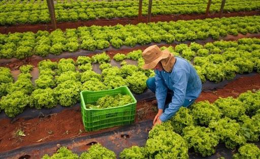 Amazonas tem R$ 10 milhões para atender projetos da agricultura familiar