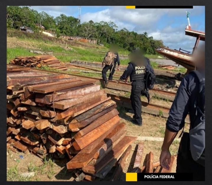 Duas pessoas são presas por tráfico de madeira e posse ilegal de arma
