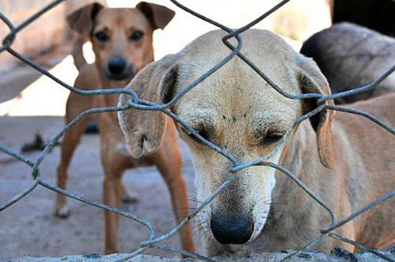 Senado aprova pena maior, de até cinco anos, para maus-tratos contra cães ou gatos