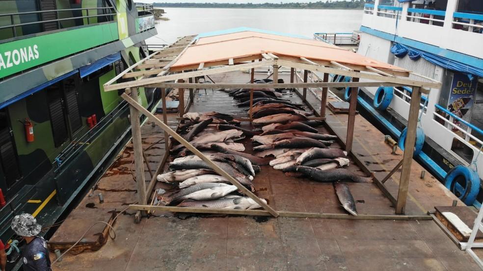 Cinco toneladas de pirarucu ilegal são apreendidas em embarcação em Coari