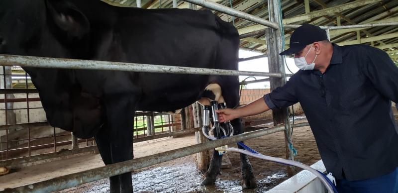 Secretaria de Produção vai ampliar incentivo à pecuária leiteira de Parintins