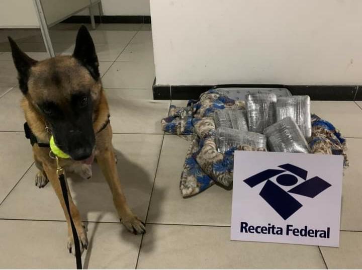 Com ajuda de agente canino, dois são presos com drogas em aeroporto de Manaus