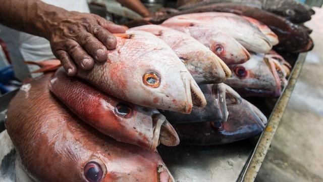 Doença da urina preta: estados registram casos de síndrome relacionada ao consumo de peixes